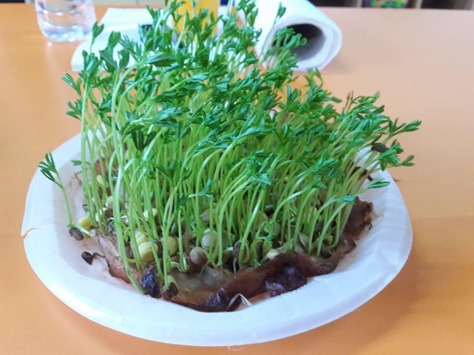 bitkilerin büyüme