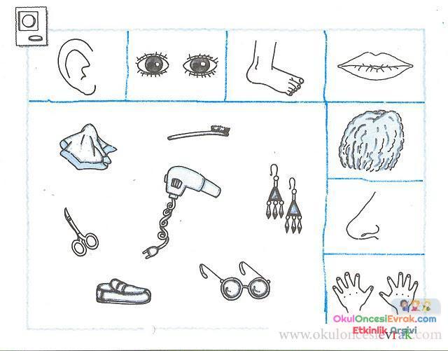 Duyu Organları (1)