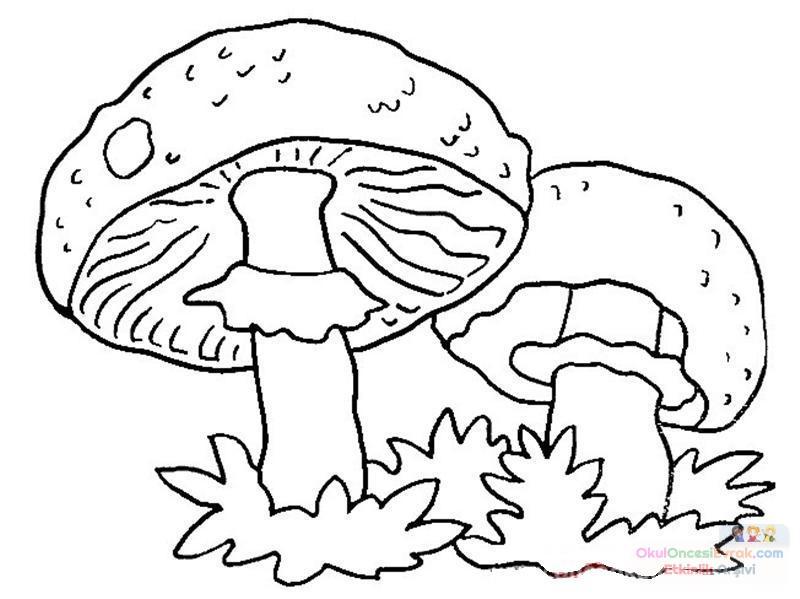 meyve sebze (112)
