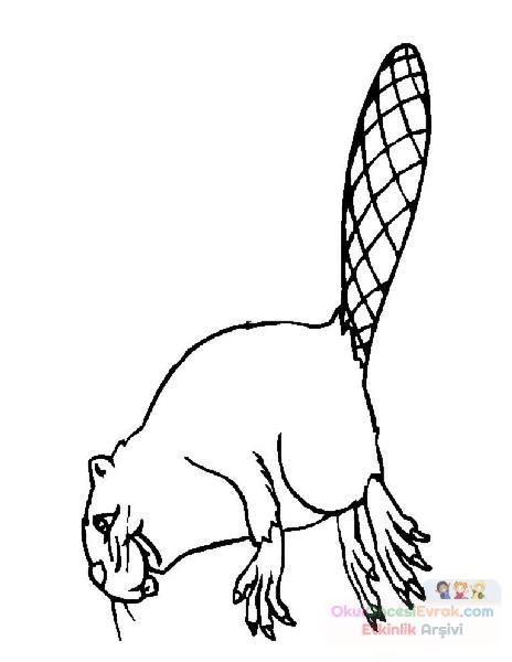 Sincap Kunduz Hayvanlar Boyama (409)