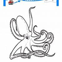 Cocuklar Icin Hayvan Ahtapot Boyama Sayfasi 17 Preschool Activity