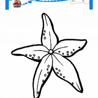 Cocuklar Icin Hayvan Hayvan Deniz Yildizi Boyama Sayfasi 1