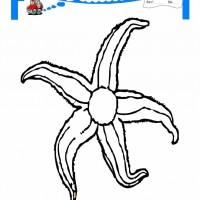 Deniz Yıldızı Boyama Sayfaları Gazetesujin