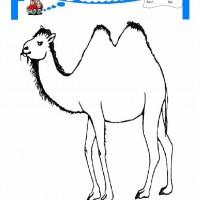 çocuklar Için Hayvan Hayvan Deve Boyama Sayfası 9 Preschool Activity