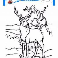 Cocuklar Icin Hayvan Hayvan Geyik Boyama Sayfasi 23 Preschool