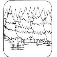 Orman Haftası Belirli Gün Ve Haftalar Boyama Sayfası 2 Preschool