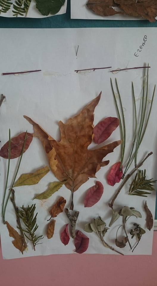 yapraklar ıle ılgılı sanat etkinliği (4)
