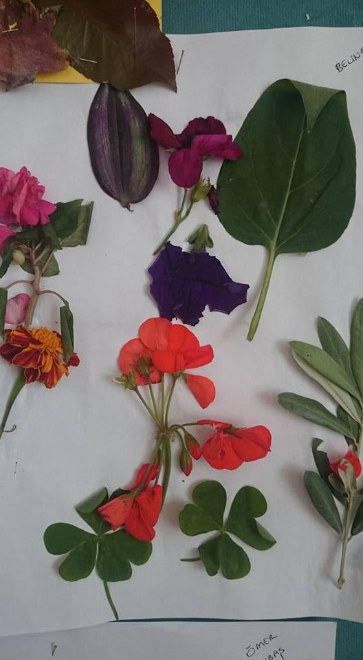 yapraklar ıle ılgılı sanat etkinliği (7)